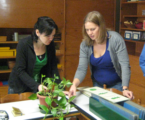 Students working with botany material